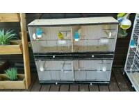 Budgies and cages for sale