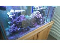 Live Rock for a Marine Aquarium Approx 30KG + for a 4 ft aquarium, 14 + including soft corals.