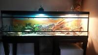 Bearded Dragon, tank and accessories