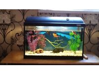 24inch (60cm) Fluval fish tank aquarium with lid and light and Accessories