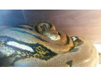 Reptile forever home