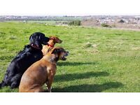 Professional and Friendly Dog Walking and Pet Sitting Service, in Chichester and surrounding areas
