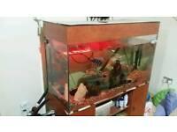fish tank setup no fish