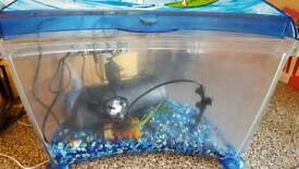 Fish tank with fliter