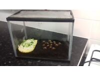 15 African snails and small tank