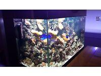 AQUA MEDIC Marine fish tank
