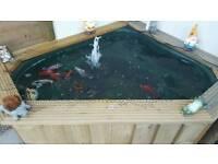 Pond fish mostly goldfish