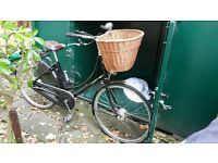 Black Pashley Princess Sovereign with certificate of ownership