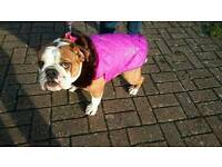 Raincoats made to measure Dogs