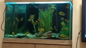 Complete aquarium set up