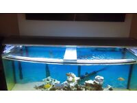 for sale 300 liter and 65 liter fish tanks