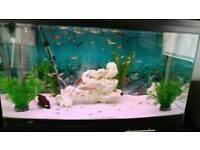 215 litre fish tank for sale