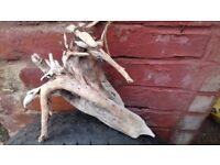 Bog wood /drift wood pieces £2- £10.