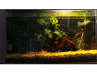 120 litres panoramic fishtank with fish filter plants food and more