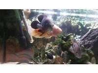 Juwel aquarium with fish, external filter and air filter