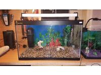 Clear seal fish tank 70 l