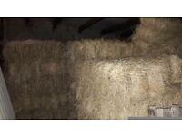 Hay for sale conventional bales barn stored ragwort free good quality can deliver