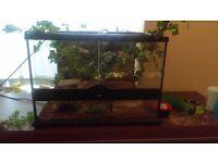 hainan cave gecko/full set up