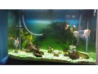 Tropical fish tank 300 liter for sale