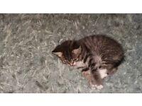 Kittens 1 tabbie 1 ginger