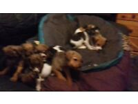 me Puppies For Sale