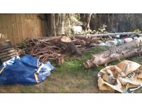 Free branches and logs for firewood/bonfire