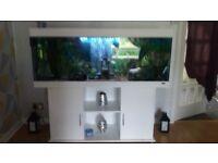 5 ft juwel aquarium with lots of extras