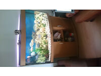 JUWEL 260 LITER BOW FRONTED FISH TANK FOR SALE WITH FISHES,,FULL SET UP