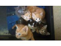 6 X Beautiful Kitten for sale