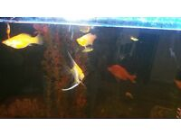 Various tropical fish forsale