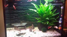 Aquariums ( fish tanks ) very good condition