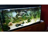 4ft fish tank - complete set up