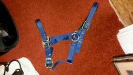 Blue Nylon Head Collar