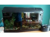 90ltr Fluval aquarium,with fish and lots of assesories.Genuin sale,bargain,first to see will buy
