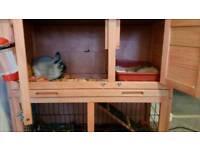Female 7mnth old rabbit