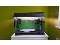 Fish tank full setup 60l