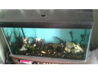3ft tank for sale