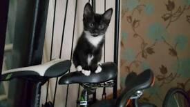 3 black and white kittens 2 male 1 female