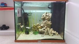 Fish Tank, Fish and C02 system.