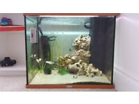 Under offer - Fish Tank, Fish and C02 system.