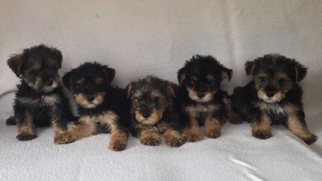 Dogs Free To Good Home Gumtree