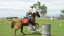 Quiet Riding Pony for Sale Goondiwindi Area Preview