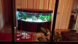 Fish tank 6ft v large