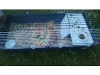 2 rabbits and hutch for sale