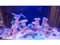 Coral's + Fish + ARKA 7kg rock for sale!
