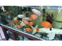 4x parrot fish