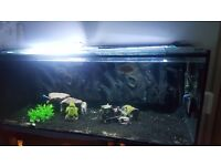 Two fish tanks for sale 5ft by 2ft by 2ft than a 2 and half ft breeding tank