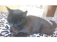 !!!!MISSING SMALL BLACK CAT!!!!