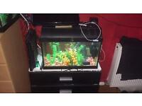 FISH TANKS NEED GONE SOON (3ft sold pending ) 2ft1ft )