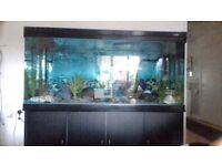 5ft aquarim full set up on black 3 door cabernet